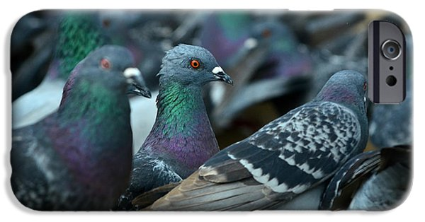 Pigeon iPhone Cases - Mr. Personality iPhone Case by Fraida Gutovich