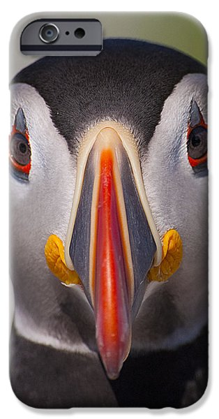 Beach iPhone Cases - Mr. Puffin.. iPhone Case by Nina Stavlund