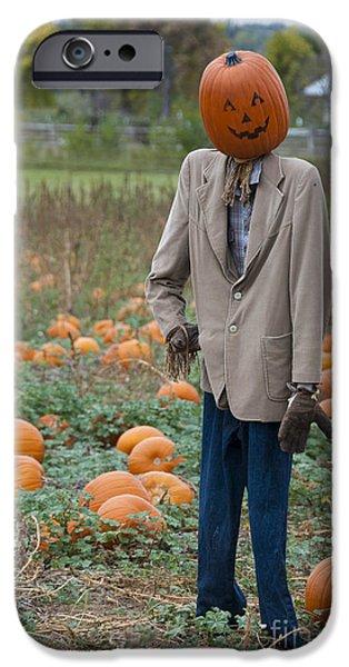 Crops iPhone Cases - Mr. Pumpkin Head iPhone Case by Juli Scalzi