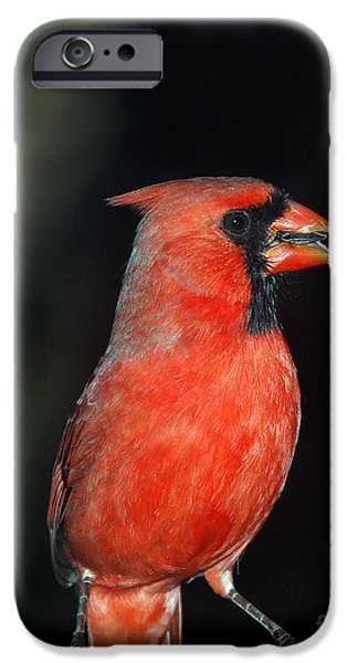 Birds iPhone Cases - Saint Louis iPhone Case by Skip Willits