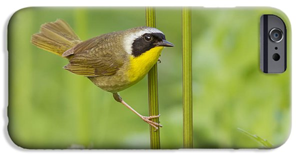 Warbler iPhone Cases - Mr Yellowthroat iPhone Case by Mircea Costina Photography