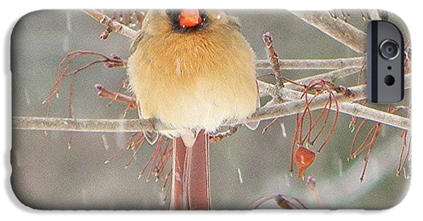 Snowy Day iPhone Cases - Mrs Cardinal iPhone Case by Judy Genovese