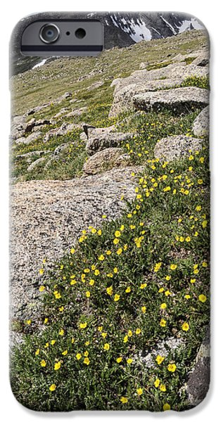 Unique View iPhone Cases - Mt. Evans Wildflowers iPhone Case by Aaron Spong