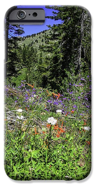 Mount Rose iPhone Cases - Mt. Rose Highway Scenic Wildflowers iPhone Case by LeeAnn McLaneGoetz McLaneGoetzStudioLLCcom