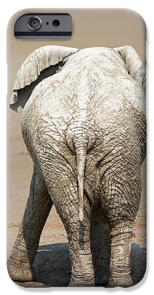 Elephants Photographs iPhone Cases - Muddy elephant with funny stance  iPhone Case by Johan Swanepoel