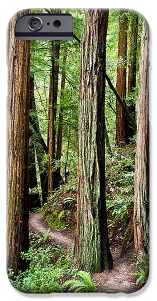 Sausalito iPhone Cases - Muir Woods iPhone Case by Niels Nielsen