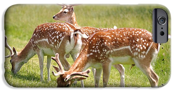 Black White iPhone Cases - Multitasking Deer in Richmond Park iPhone Case by Rona Black
