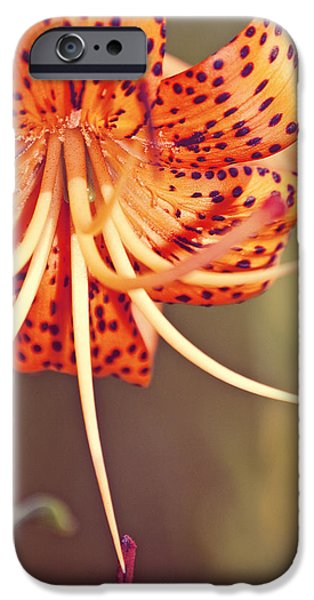 Nature Abstracts iPhone Cases - Mummsy iPhone Case by Olivia White