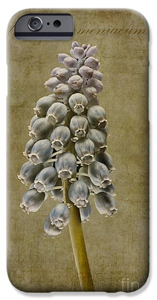 Meadow Digital iPhone Cases - Muscari armeniacum with textures iPhone Case by John Edwards
