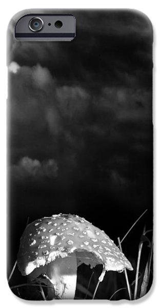 Mushrooms iPhone Cases - Mushroom iPhone Case by Bob Orsillo