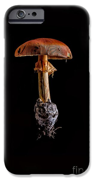 Mushrooms iPhone Cases - Mushroom iPhone Case by Edward Fielding