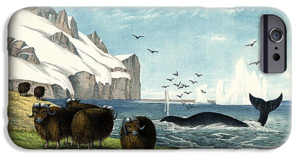 Arctic Drawings iPhone Cases - Musk Ox iPhone Case by Splendid Art Prints