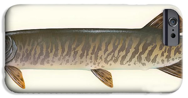Muskie iPhone Cases - Muskellunge  iPhone Case by Mountain Dreams