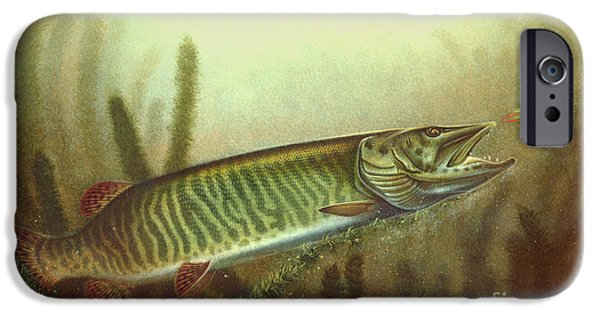Musky Paintings iPhone Cases - Muskie and Spinner Bait iPhone Case by Jon Q Wright