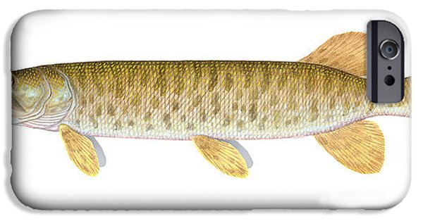 Muskie iPhone Cases - Muskie iPhone Case by Carlyn Iverson