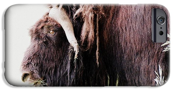 Nation iPhone Cases - Muskox iPhone Case by Ramona Johnston