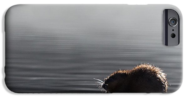 Swamps iPhone Cases - Muskrat Square iPhone Case by Bill  Wakeley