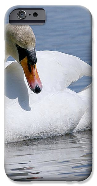 Mute Swan 1 iPhone Case by Sharon  Talson