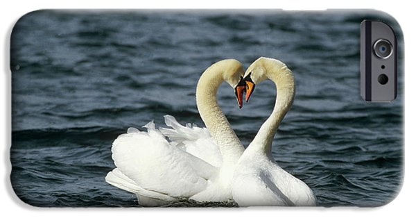 Recently Sold -  - Couple iPhone Cases - Mute Swan Affectionate Pair iPhone Case by Konrad Wothe