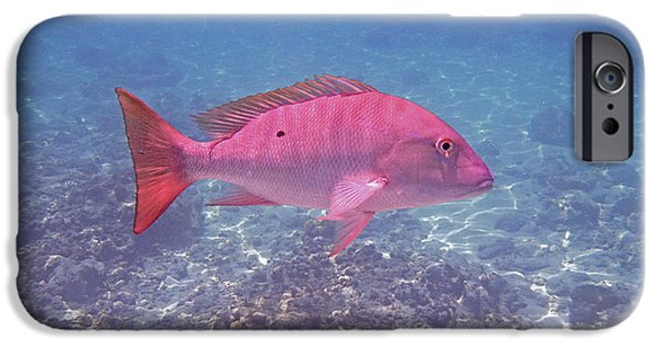 Goliath iPhone Cases - Mutton Snapper Profile iPhone Case by Carey Chen