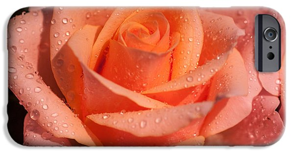 Peach Rose iPhone Cases - My Birthday Rose iPhone Case by Jenny Rainbow