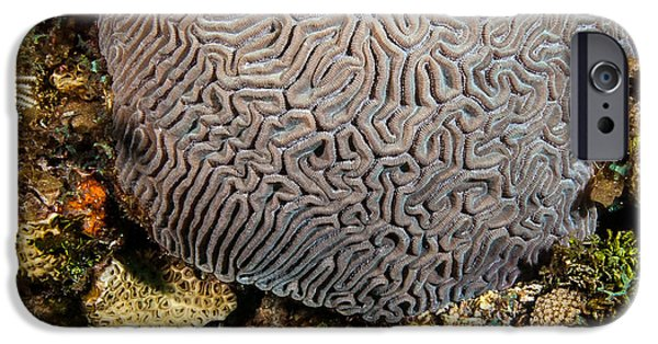 Calcium Carbonate iPhone Cases - My brain underwater iPhone Case by Jean Noren