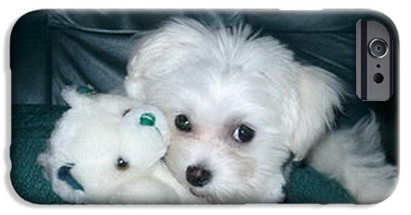 Maltese Puppy iPhone Cases - My Dog Maggie iPhone Case by Joyce Gebauer