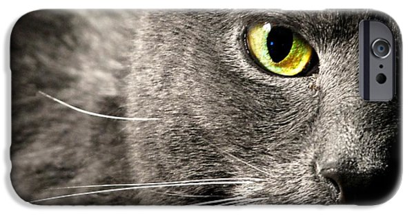 Domestic Short Hair Cat iPhone Cases - My Eyes On You iPhone Case by Diana Angstadt