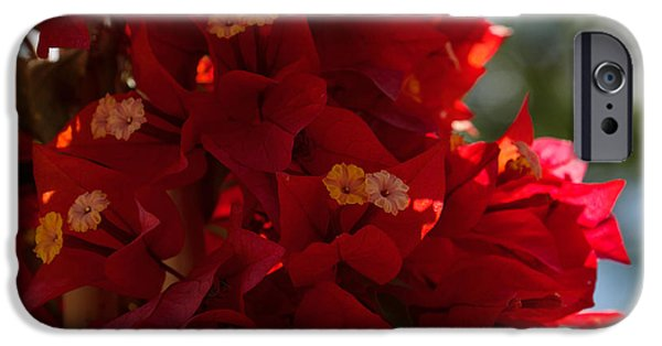 Fabulous Gifts iPhone Cases - My Fabulous Tropical Valentines Gift - a Vivid Red Bougainvillea iPhone Case by Georgia Mizuleva