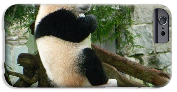 Smithsonian iPhone Cases - My First Birthday Cake - Bao Bao The Panda iPhone Case by Emmy Marie Vickers