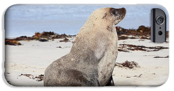 Sea Lions iPhone Cases - My Good Side iPhone Case by Mike Dawson