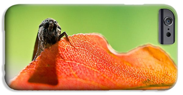 Moth iPhone Cases - My Leaf iPhone Case by Shane Holsclaw