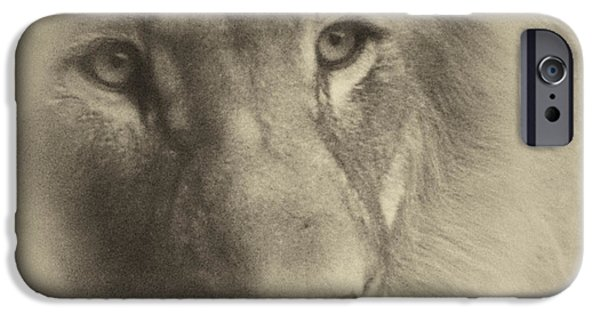 Central Il iPhone Cases - My Lion Eyes in Antique iPhone Case by Thomas Woolworth