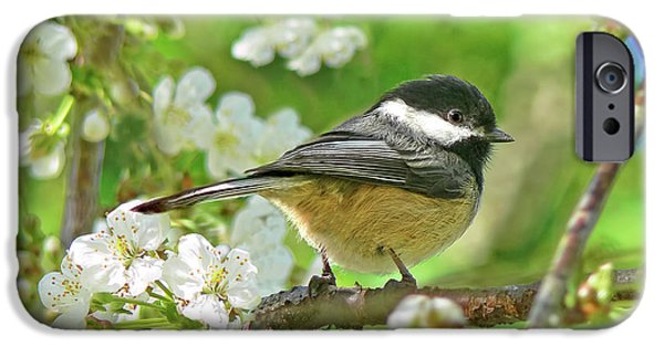 Cherry Blossoms Photographs iPhone Cases - My Little Chickadee in the Cherry Tree iPhone Case by Jennie Marie Schell