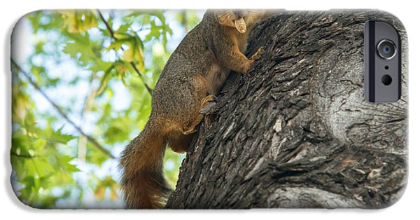 Fox Squirrel iPhone Cases - My Peanut iPhone Case by Robert Bales