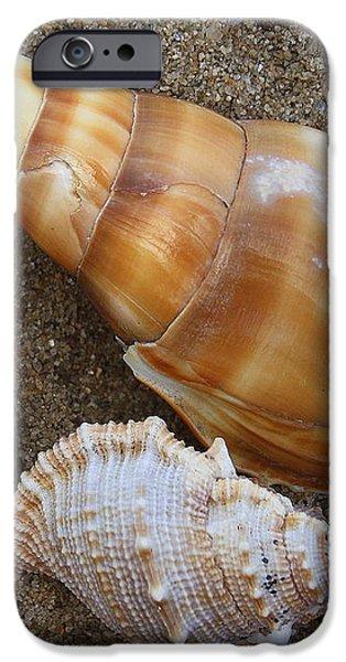 My Seashells iPhone Case by  Photographic Art and Design by Dora Sofia Caputo