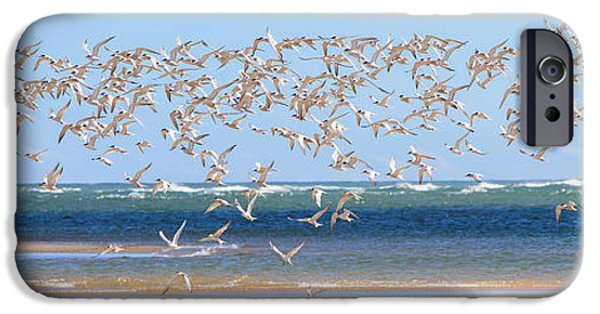 Tern iPhone Cases - My Tern iPhone Case by Bill  Wakeley