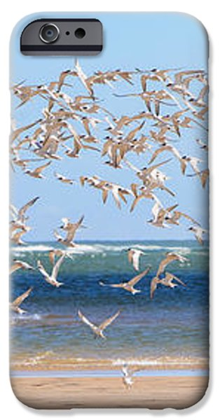 My Tern iPhone Case by Bill  Wakeley