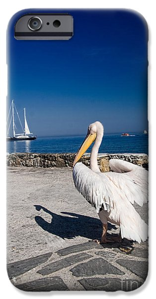Seacoast iPhone Cases - Mykonos Pelican iPhone Case by David Smith