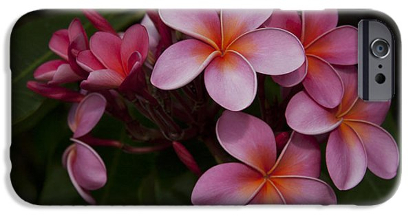 Aloha iPhone Cases - Na Lei Pua Melia O Wailua - Pink Tropical Plumeria Hawaii iPhone Case by Sharon Mau