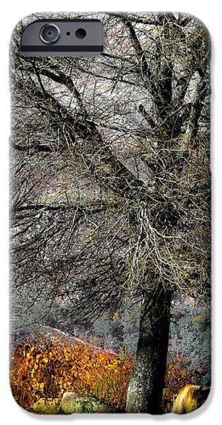 Edgar Laureano Photographs iPhone Cases - Naked For The Winter iPhone Case by Edgar Laureano