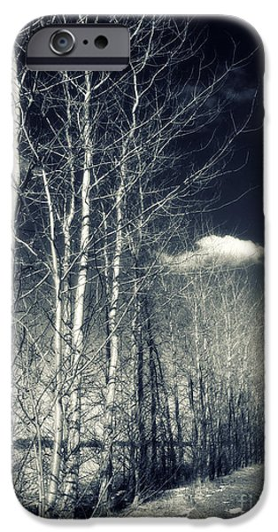 Aging iPhone Cases - Naked Trees iPhone Case by Stylianos Kleanthous