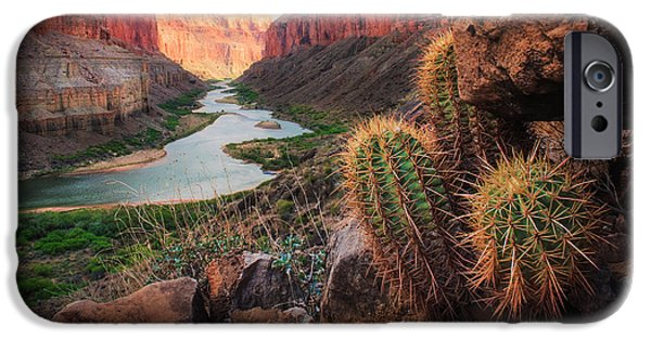 Cliffs iPhone Cases - Nankoweap Cactus iPhone Case by Inge Johnsson