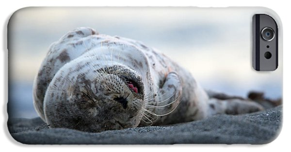 Nap iPhone Cases - Seal Pup Nap iPhone Case by Mike Dawson