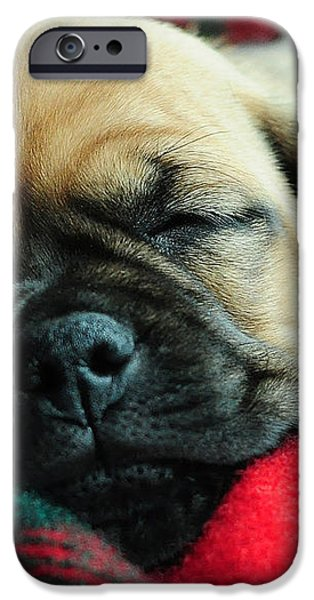 Nap Time iPhone Case by Lisa  Phillips