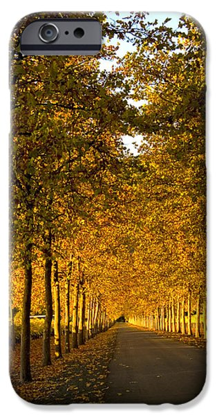 Bill Gallagher Photographs iPhone Cases - Napa Valley Fall iPhone Case by Bill Gallagher