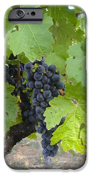Napa Valley Vineyard Grapes iPhone Case by Jennifer Lamanca Kaufman