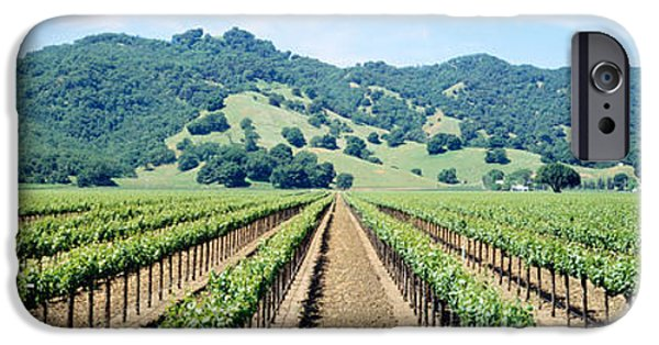 Winery Photography iPhone Cases - Napa Valley Vineyards Hopland, Ca iPhone Case by Panoramic Images