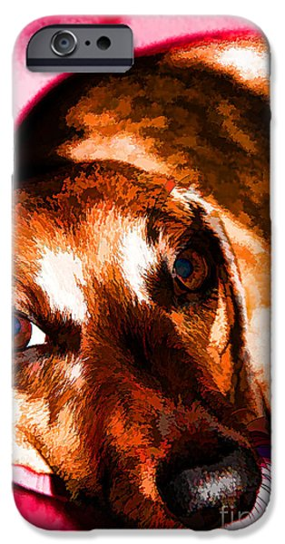 Four Animal Faces iPhone Cases - Napping After Dinner iPhone Case by Mariola Bitner