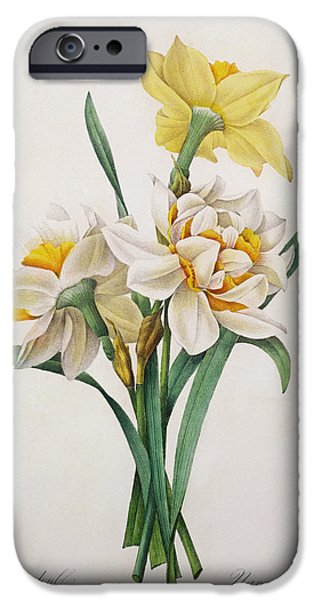 Floral Still Life Paintings iPhone Cases - Narcissus gouani iPhone Case by Pierre Joseph Redoute